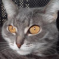 Аватар Аделины Кошки