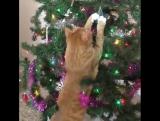 Коты и ёлки :3