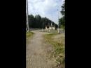 Лес по дороге на работу