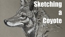 Drawing a Coyote on Gray Paper