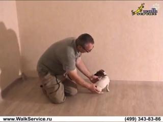 Дрессировка щенка, как отучить щенка кусаться