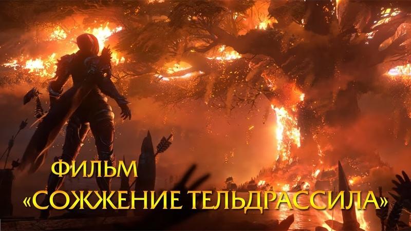 Фильм «Сожжение Тельдрассила» | Battle for Azeroth