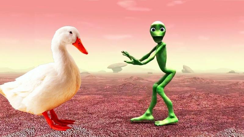 Suara binatang animasi Nama hewan lucu untuk anak anak hewan liar dan hewan ternak