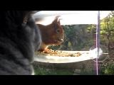 Котейка наблюдает за белкой в птичьей кормушке.