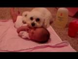 Собаки ЗАЩИЩАЮТ детей - Дети и собаки лучшие друзья, собаки няньки - веселая подборка