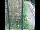Могила Моллы Гурани который являлся учителем Султана Мухьаммада аль Фатиха