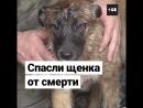 Спасли щенка, застрявшего между гаражами
