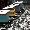 Пчеловод на диване