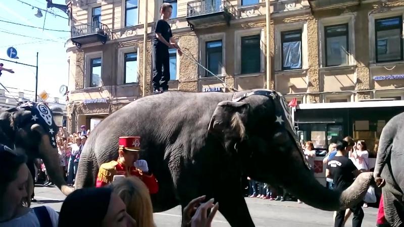 По улицам слона водили..)СПб 2018 день города