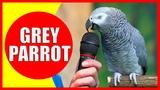 AFRICAN GREY PARROT Einstein Talking - African Gray Parrot Videos for Kids Parrot Sounds