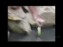 орангутанг спасает птичку