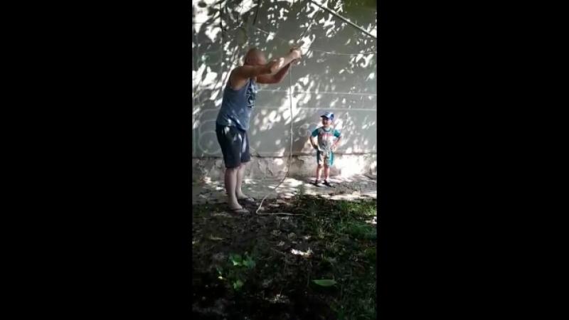мэдвед под деревом