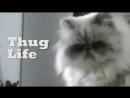 Thug life cat