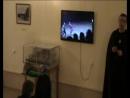 Гатчина Приоратский дворец Новогодняя кутерьма 2018 г Игра конкурс с использованием театра макета Рыцарский турнир