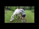 Что может лошадка