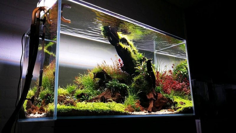90cm Nature aquarium Prodibio Interzoo by Balbi