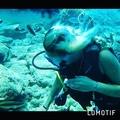 __i_ri_sha__21_ video