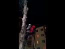 Екатеринбуржец спас котёнка который весь день просидел на дереве