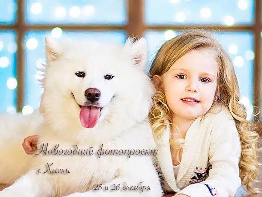 Афиша Волгоград Новогодняя фотосессия с Хаски и Самоедами