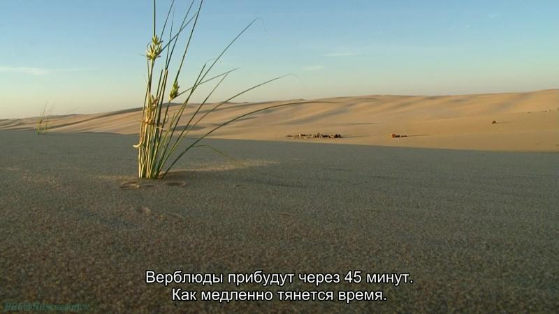 BBC «Планета людей (2). Пустыни: Жизнь в пекле» (Познавательный, природа, 2010)