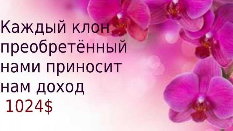 Выход в Гарант партнера и вознаграждения в ЛЕГКО! Команда Николаевой Елены!