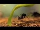 Дикие джунгли. Хищники и жертвы. Мир животных. National Geographic