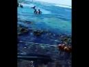 Fruto do mar 🐙⚓