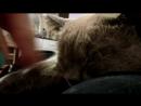 Тема - самый добрый кот когда хочет есть