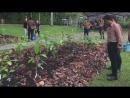 Шубенду Шарма Как вырастить лес в 10 раз быстрее