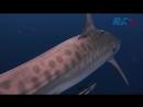 Дайвер во Флориде заглянул в пасть тигровой акуле