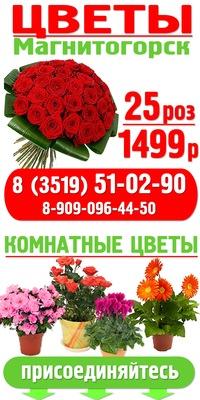 Живые цветы мимозы оптом одесса, букеты цветов большие