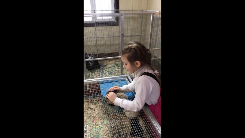 Контактный зоопарк.Любимые зайцы
