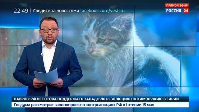Новости на Россия 24 • Зоозащитнику грозит реальный срок за спасение замурованных кошек