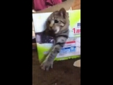 триде кот