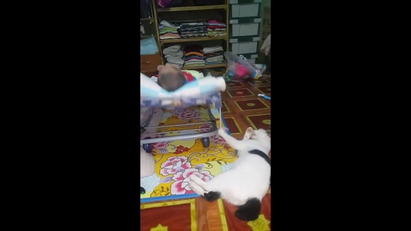 Кот в режиме многозадачности