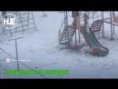 В Красноярске сняли на видео жестокую игру детей с собакой