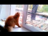 Кот на защите своего дома