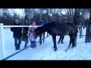 В нашем парке Наташинские пруды - люди, дети, лошади...собаки..