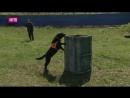 В Нижегородском парке Победы провели показательные выступления собак-спасателей