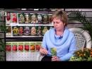 Семена огурцов F1🌱ТОП 7 лучших сортов огурцов, которые не оставят вас без урожая