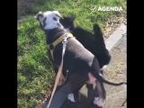 Кот и пёс гуляют вместе
