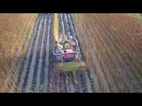 Drone Video of Willow Harvesting in Somerset