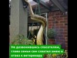 Огромная и злая змея напугала англичан