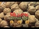 Грецкий орех Яцек Саженцы и Семена 0985674877 0957351986 Walnuts Broker