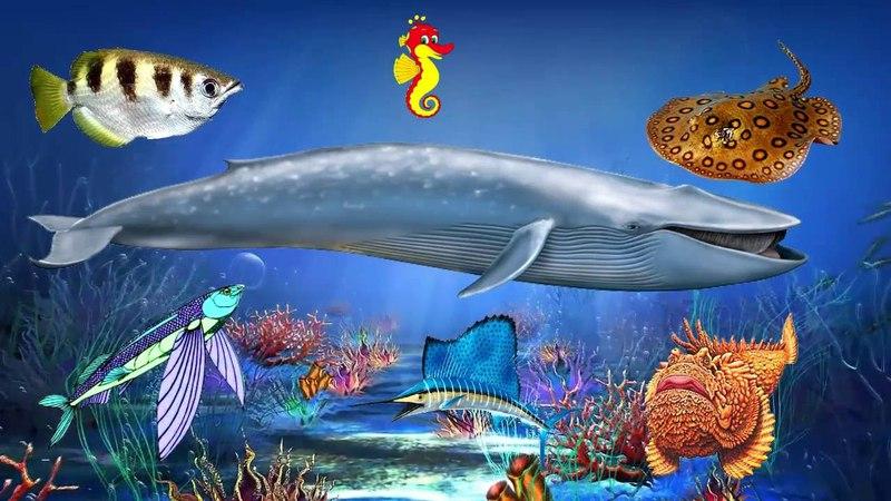 Морские животные - познавательное видео для детей. Жители моря и океана. » Freewka.com - Смотреть онлайн в хорощем качестве