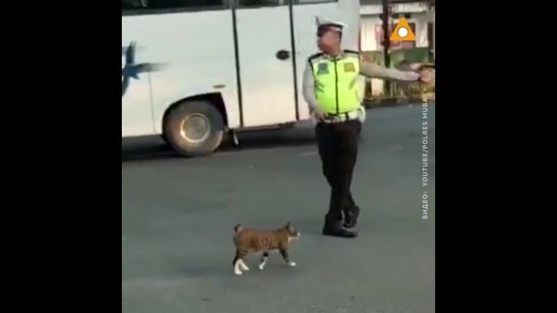 Полицейский в Индонезии остановил движение, чтобы перевести кошку через дорогу!