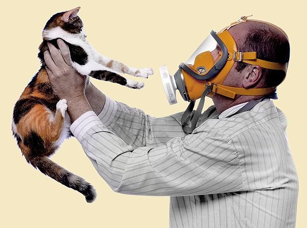 Аллергия на кошачий корм у человека