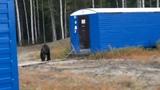 Медведь ломится в вагончик,руки трясутся.