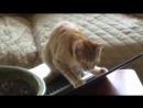 Приколы с кошками и котами 13. Подборка смешных и интересных видео с котиками и