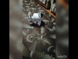 Котя, пусти к маме!!!